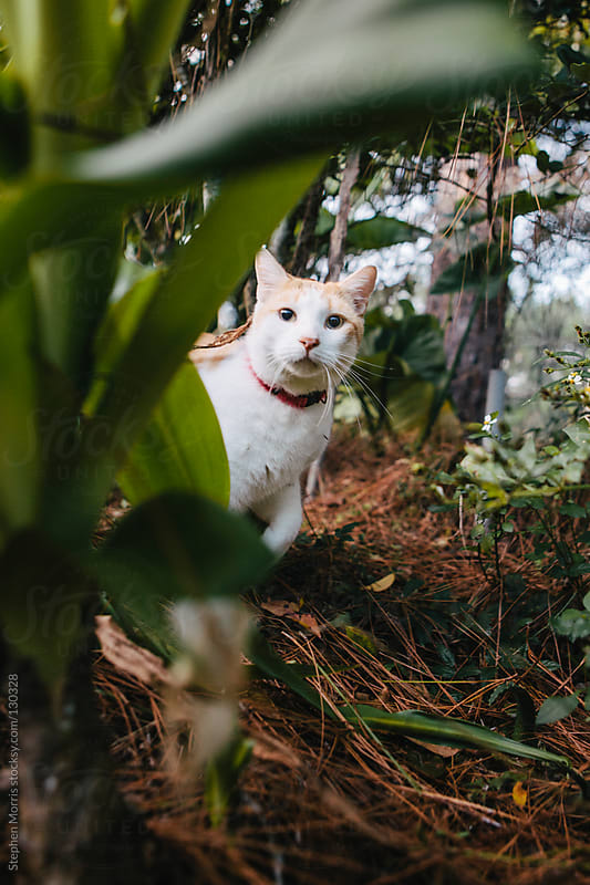 Cat looking through undergrowth by Stephen Morris for Stocksy United