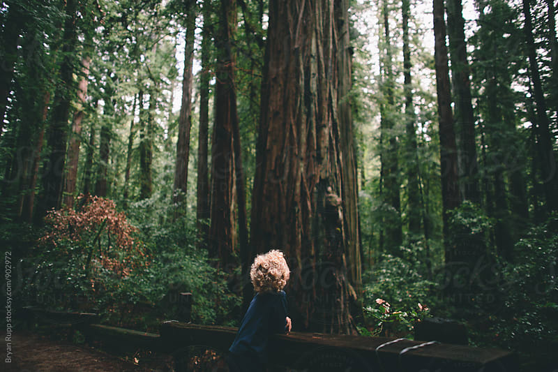 Little Boy Looking Into the Forest by Bryan Rupp for Stocksy United
