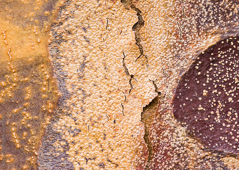 Paperbark Maple tree bark, closeup by Mark Windom for Stocksy United