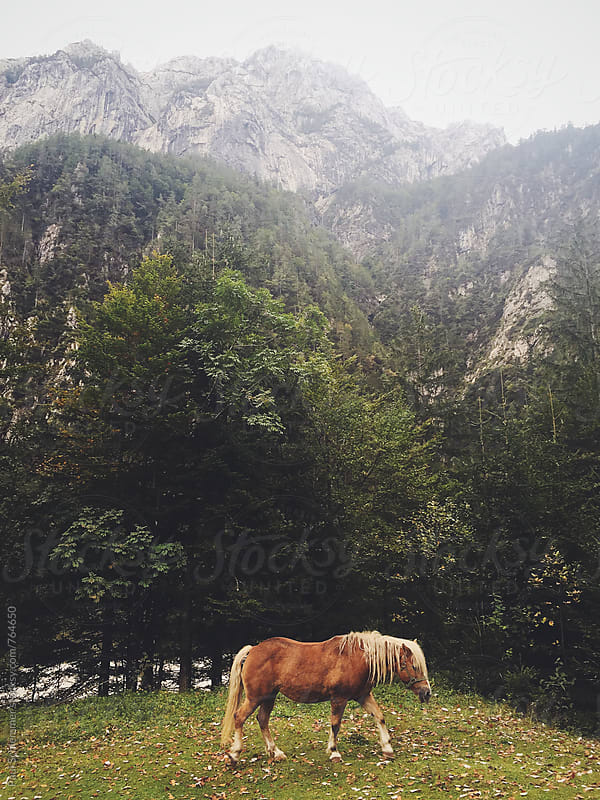 random horse encounter by Paul Schlemmer for Stocksy United