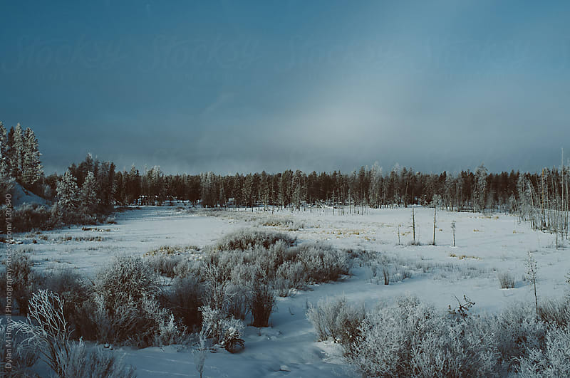 Snowy Field by Dylan M Howell Photography for Stocksy United