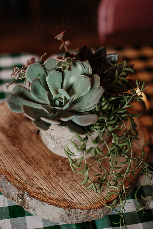 Wedding Succulent by Sidney Morgan for Stocksy United