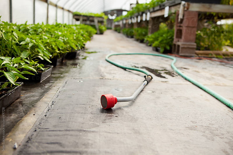 Nursery: Hose on Ground in Greenhouse by Sean Locke for Stocksy United