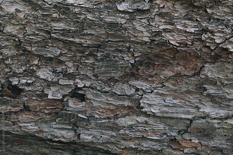 bark by jira Saki for Stocksy United