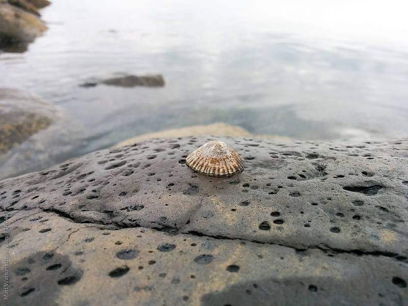 Shell on rock by Matthew Watson for Stocksy United