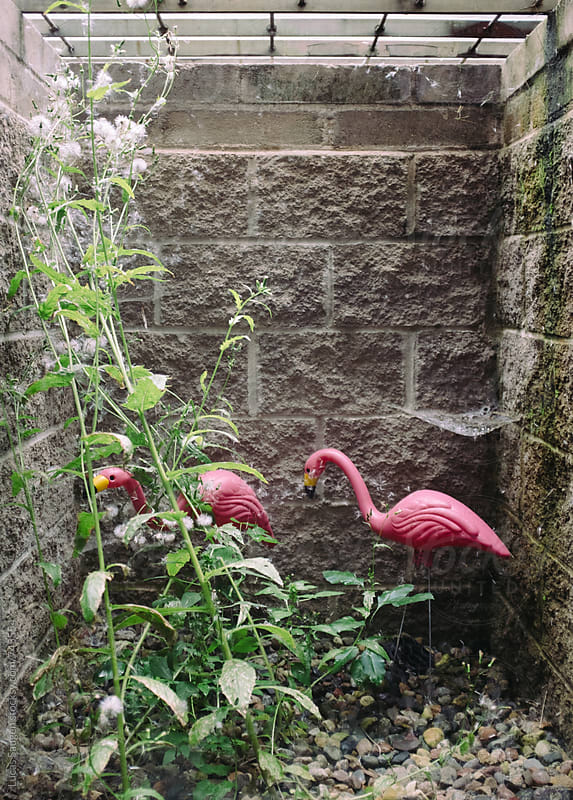 A couple of plastic pink flamingos in an enclosed window well. by Lucas Saugen for Stocksy United