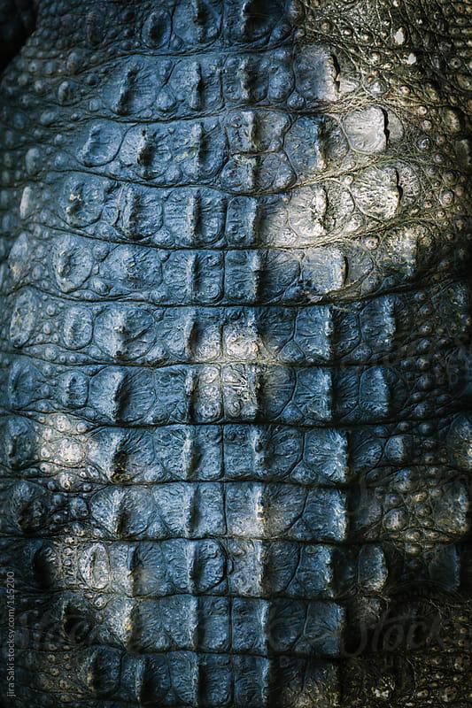 crocodile skin by jira Saki for Stocksy United