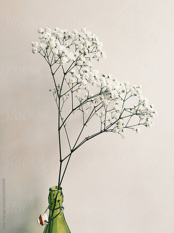 Beautiful white flowers in a vase by Maja Topcagic for Stocksy United