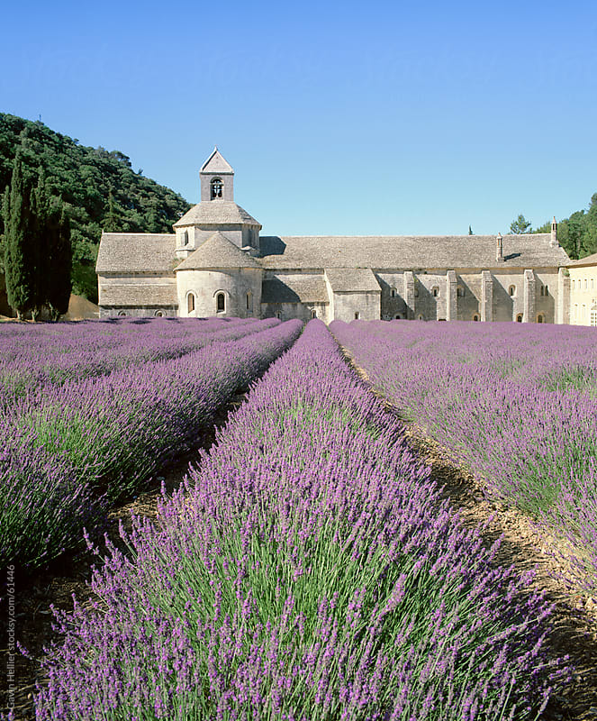 Abbey de Senanque and lavender fields, near Gordes, Vaucluse, Provence, France, Europe by Gavin Hellier for Stocksy United