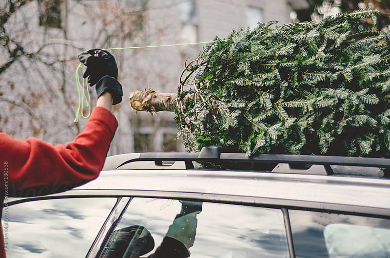 Man removing Christmas tree from roof rack of car by Deirdre Malfatto for Stocksy United