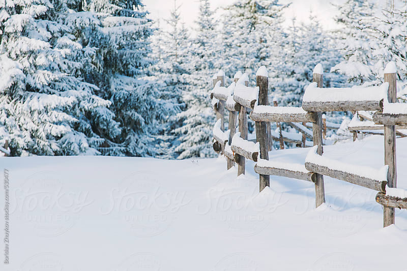 Winter Landscape With Wooden Fence And Snowy Pines by Borislav Zhuykov for Stocksy United