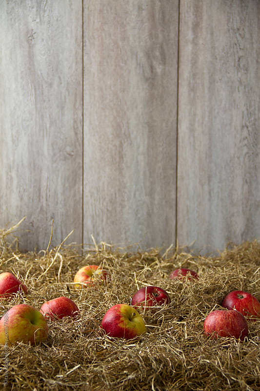 Apples on hay by Kirsty Begg for Stocksy United