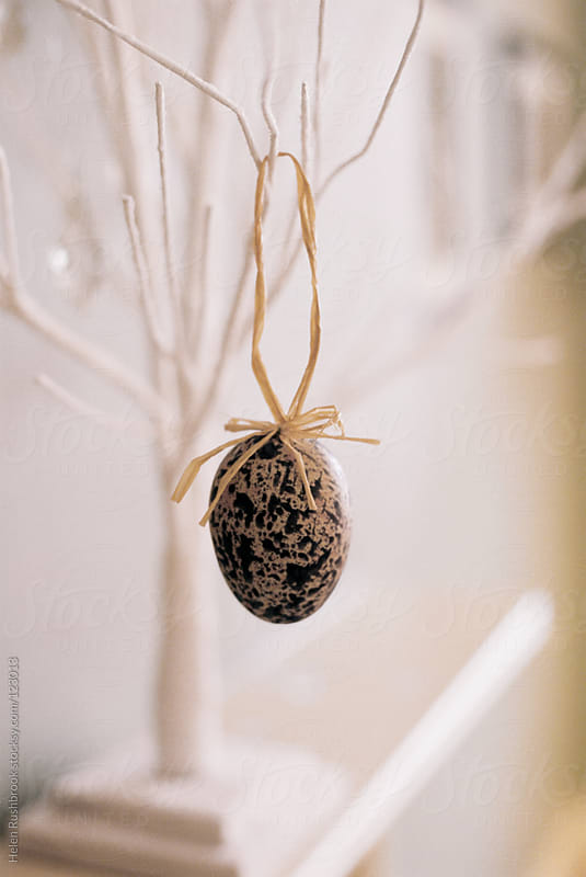 An egg hanging from a branch by Helen Rushbrook for Stocksy United