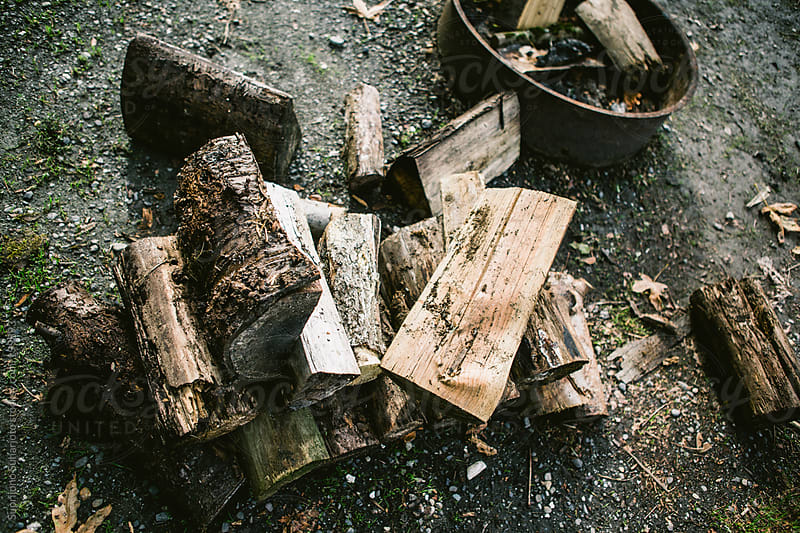 Chopped firewood in the forest by Suprijono Suharjoto for Stocksy United