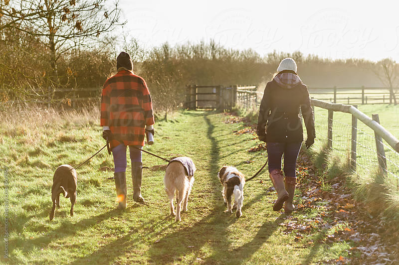 Friends take their dogs out for a walk on a sunny winter morning by Rebecca Spencer for Stocksy United