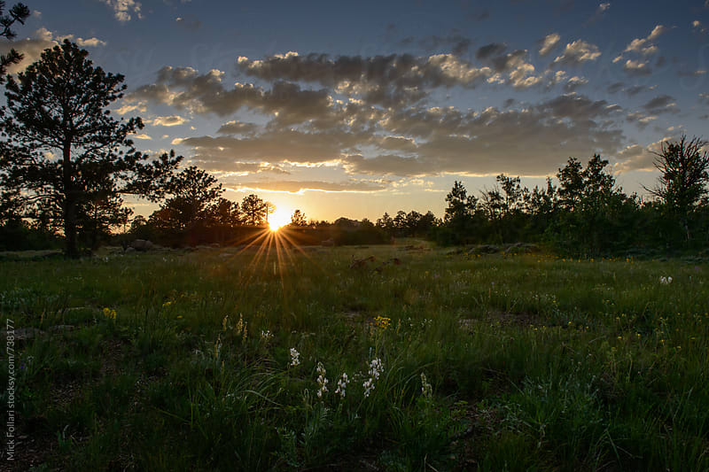 Sunset beyond a grassy field with wildflowers by Mick Follari for Stocksy United
