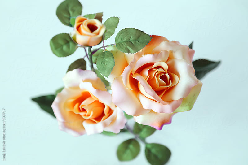 pastel roses by Sonja Lekovic for Stocksy United