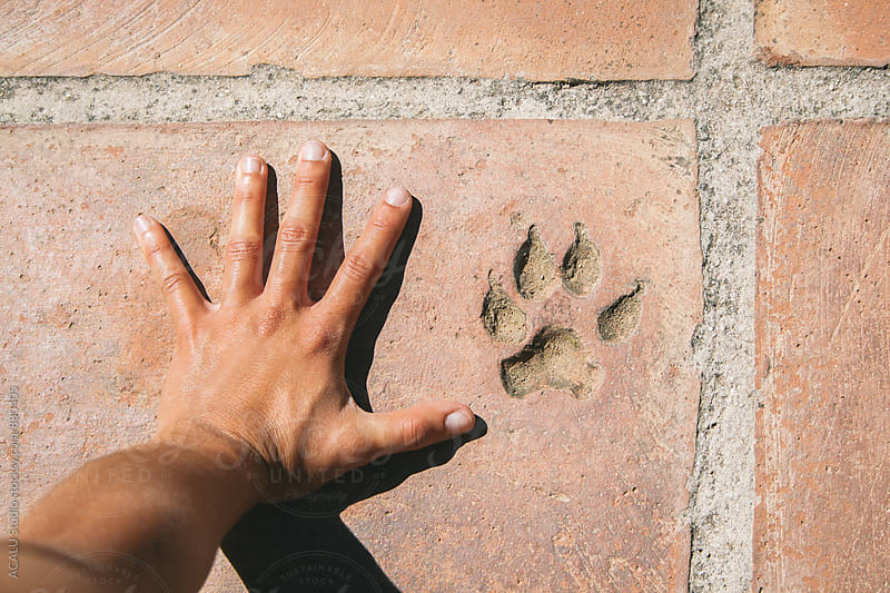 Person hand and footprint dog by ACALU Studio for Stocksy United
