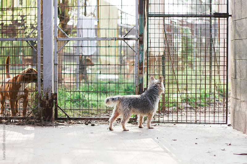Three dogs in different cages in outdoor spaces in dog pound by Laura Stolfi for Stocksy United