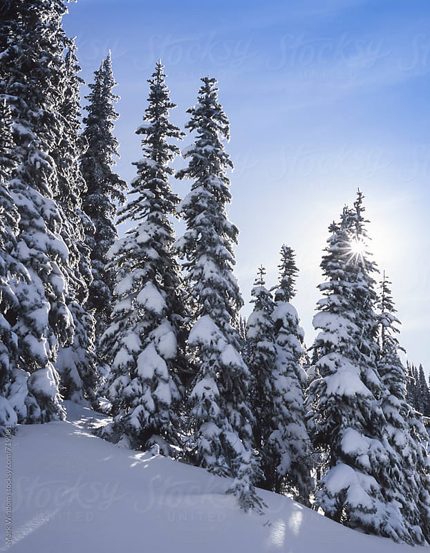 Trees, snow, and sun in winter by Mark Windom for Stocksy United