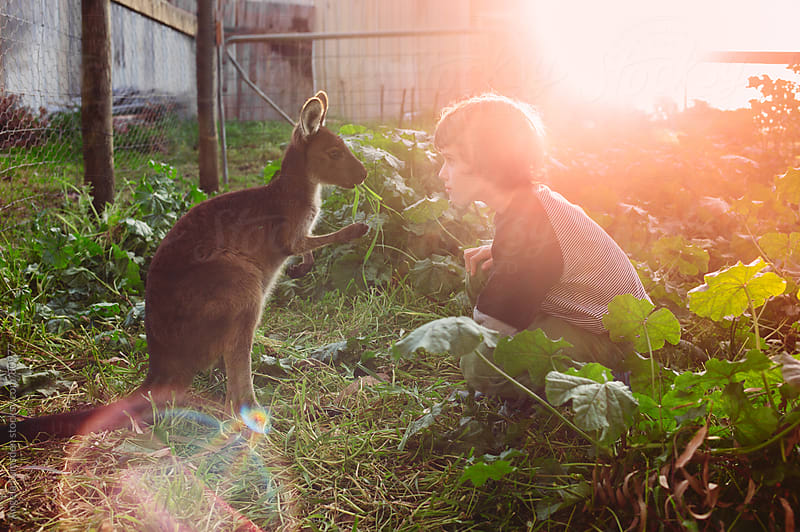Young boy feeding a small kangaroo by Angela Lumsden for Stocksy United