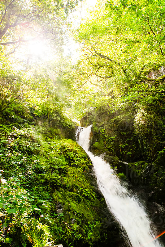 A forest scene with a waterfall by Craig Holmes for Stocksy United