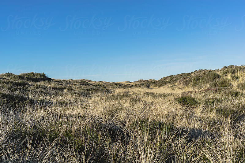 Grassy Dunes by Richard Brown for Stocksy United