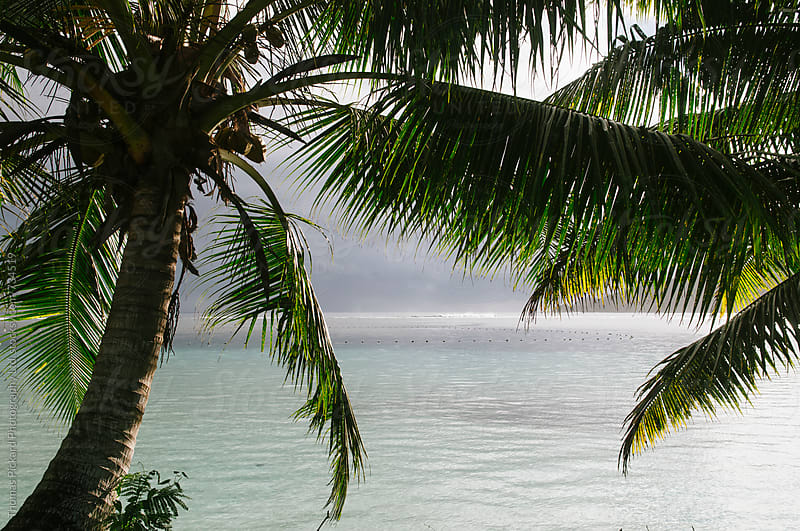 Palms and lagoon, Samoa. by Thomas Pickard for Stocksy United