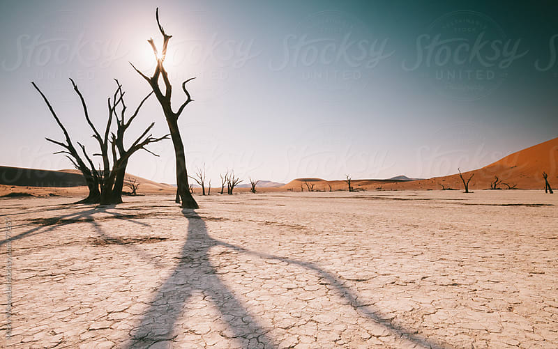 Deadvlei pan in Sossusvlei, Namibia by Micky Wiswedel for Stocksy United