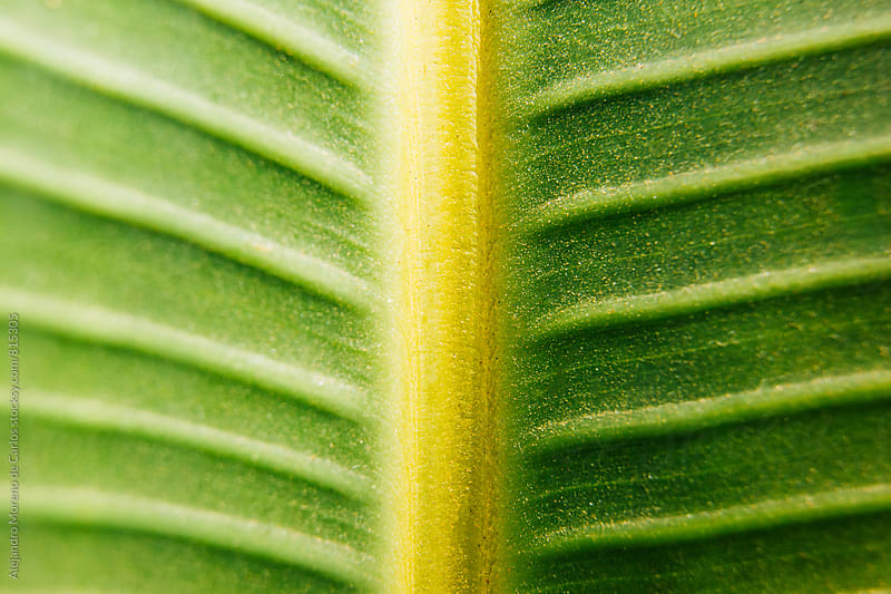 Close up macro shot of a green tropical plant leaf by Alejandro Moreno de Carlos for Stocksy United