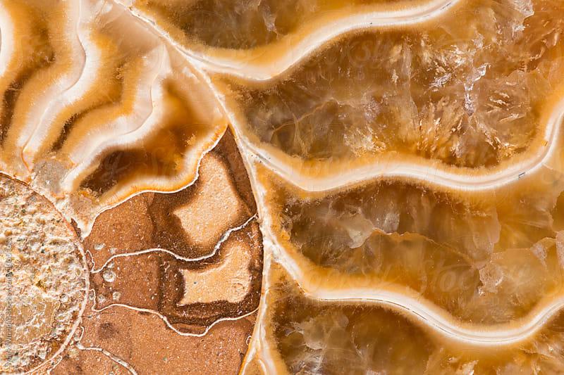 Ammonite Fossil by Mark Windom for Stocksy United