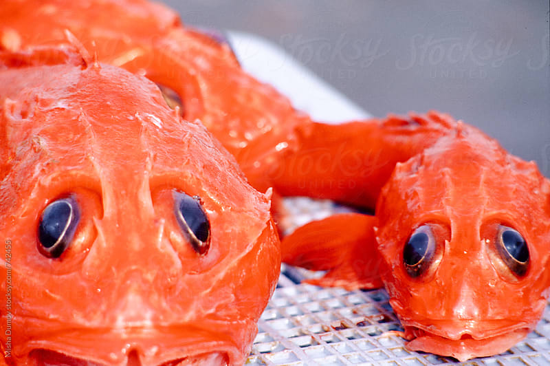 Red thornyhead or idiotfish rockfish on a blue basket by Mihael Blikshteyn for Stocksy United