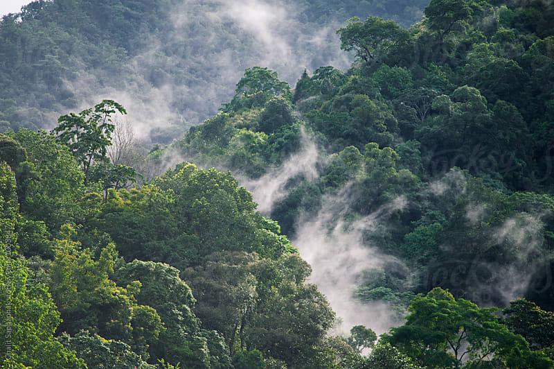 Fog Mountain by Chalit Saphaphak for Stocksy United