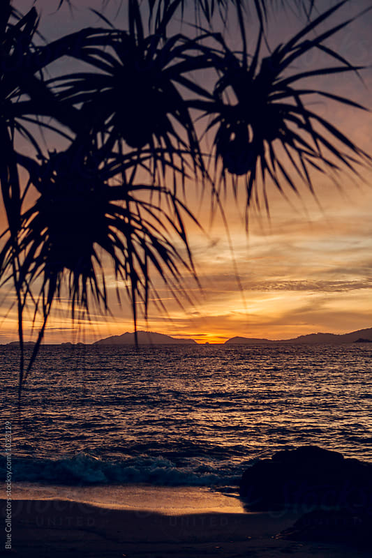 Seascape: tropical sunset on island beach, palm tree silhouette, colorful moody red sky by Jordi Rulló for Stocksy United