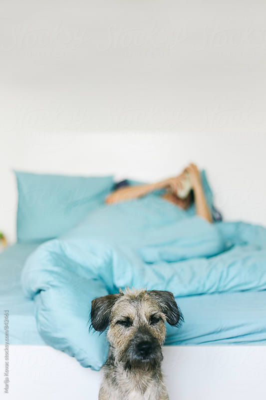 Dog sleeping in front of a bed, man in a background holding his smart phone and lying by Marija Kovac for Stocksy United