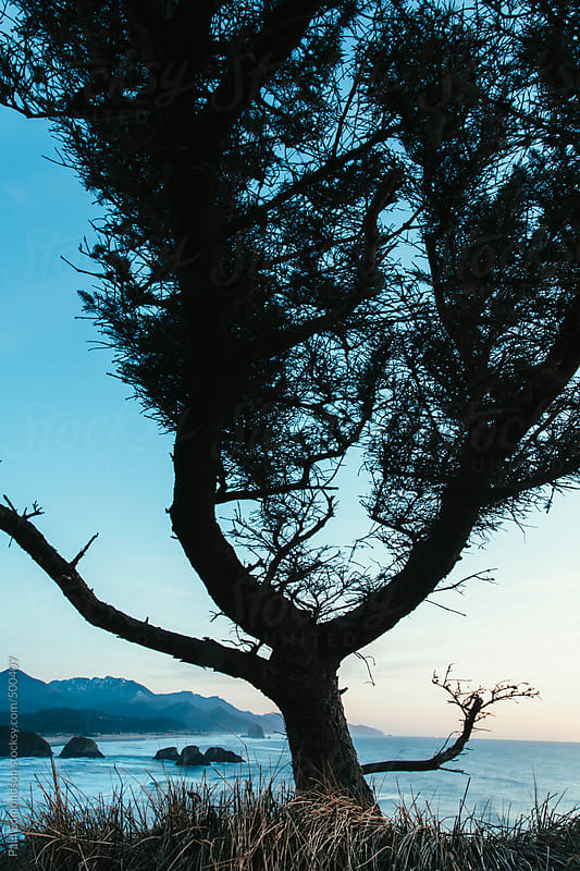 Evergreen tree on hillside at dusk, overlooking Cannon Beach on the Oregon coast by Paul Edmondson for Stocksy United