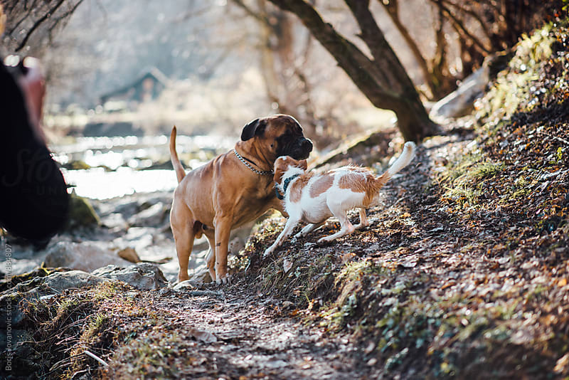Two dogs playing in the forest by the river bank by Boris Jovanovic for Stocksy United