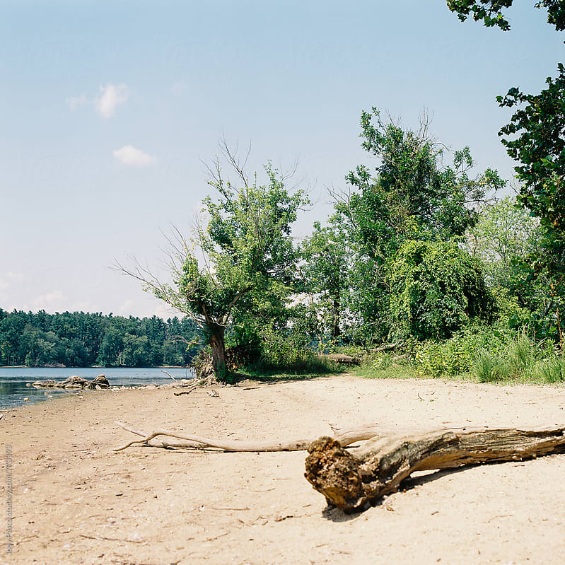 Log on the lake shore by Joey Pasco for Stocksy United