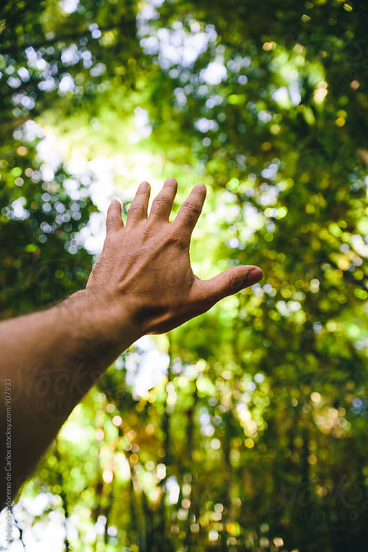 Hand reaching lush green vegetation by Alejandro Moreno de Carlos for Stocksy United