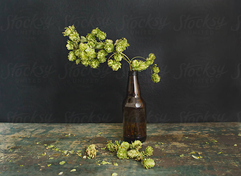 Dried hop plant sits in plain brown beer bottle on table by Tana Teel for Stocksy United