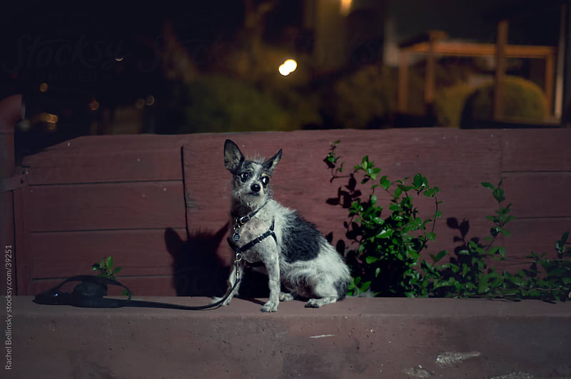 Dog in spotlight in a dark alley at night by Rachel Bellinsky for Stocksy United