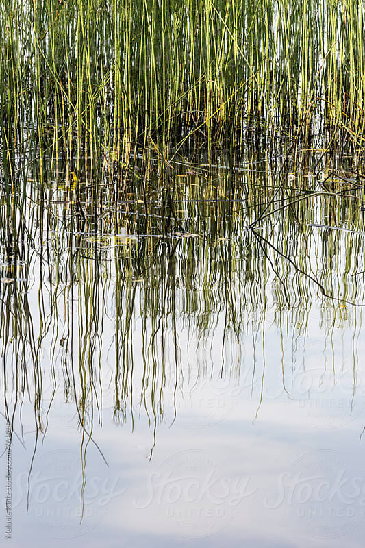 Reeds are reflecting in a lake by Melanie Kintz for Stocksy United