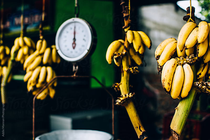 Banana Scale by Addie Mannan Photography for Stocksy United