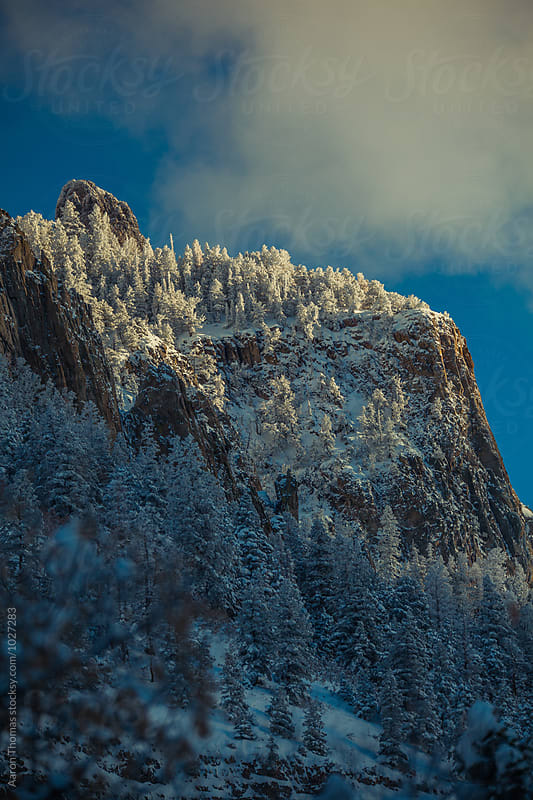 Sun hitting trees on top of Mountain by Aaron Thomas for Stocksy United