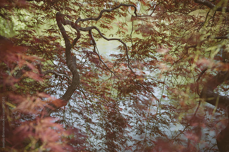 Tree Leaves in Spring by Joselito Briones for Stocksy United