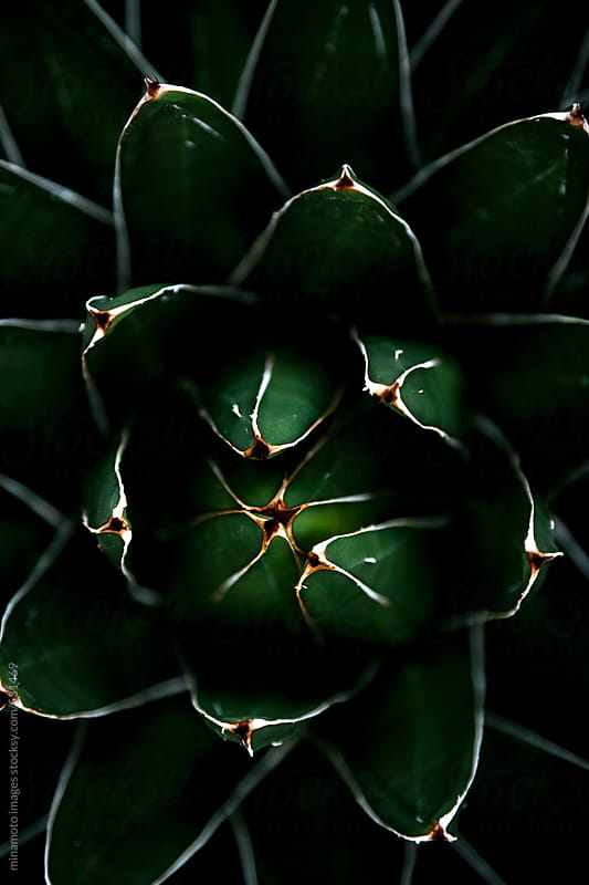 Vertical Close Up Shot Of Cactus Plant by minamoto images for Stocksy United