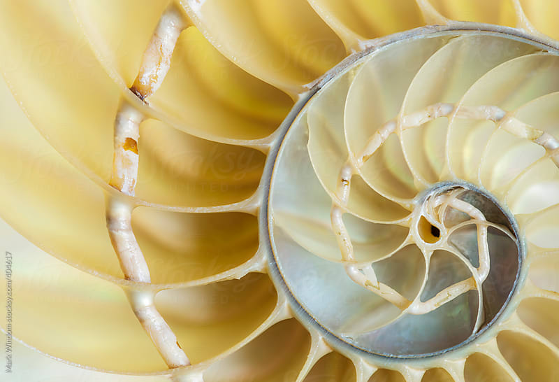 Spiral and curving patterns in a nautilus shell, closeup by Mark Windom for Stocksy United