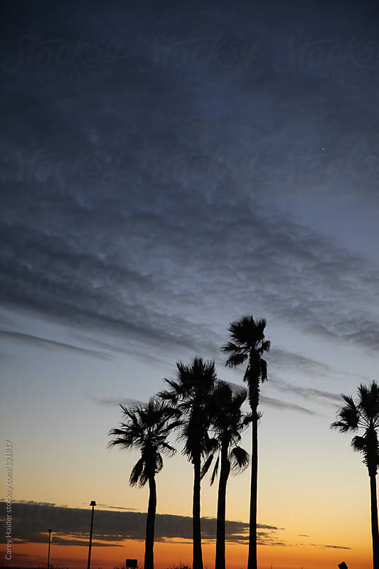 Palm Tree Sunset  by Carey Haider for Stocksy United