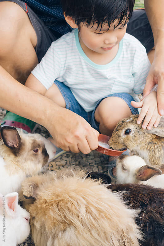 Little boy feeding bunnies by Alita Ong for Stocksy United