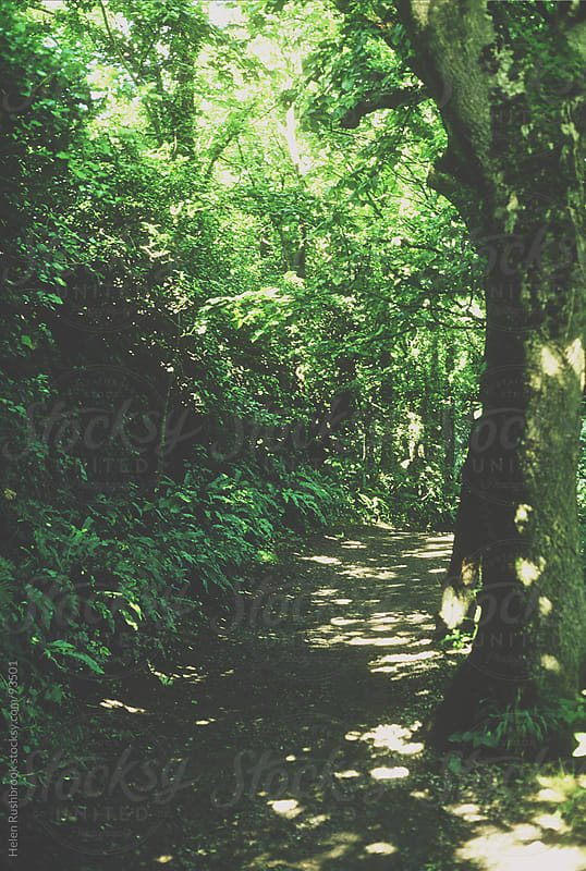 A tree-shaded path by Helen Rushbrook for Stocksy United